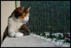 Filet Balcon pour les Chats et les Oiseaux, 5×5 M + 100 FastNet©