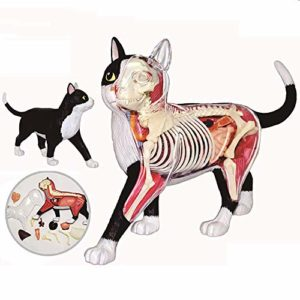 CHENGL Modèle d'anatomie de Chat de Vision 4D, Puzzle assemblant Le modèle d'enseignement médical d'organe de Jouet de biologie Animale, modèle d'assemblage Anatomique