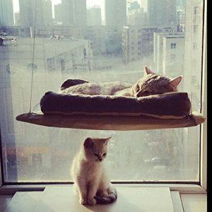 Hamac Wiseminnie 20kg pour chat, lit de chat avec coussin accrochable à la fenêtre