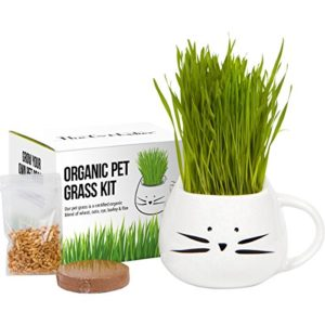 The Cat Ladies Herbe Cat Culture Biologique Kit avec Blanc Mix Organic Seed Blanc