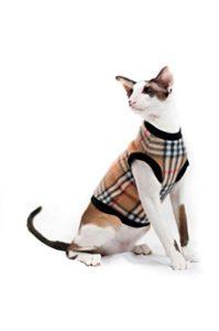 Kotomoda Cat Pull cellules brunes (XL)