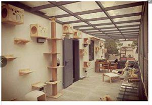 Newgreeny Bois Massif Chat Escalade Cadre Mur Tremplin Chat Nid Chat en Bois Mural Mur Escalade Cadre Plate-Forme De Saut Grand Chat Meubles Installation du kit de 10 nids