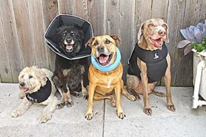 The Comfy Cone™ All Four Paws™ Collerette de convalescence pour animal domestique