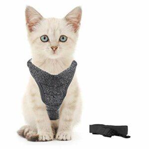 Generic Brands Harnais pour chat avec laisse ultra léger et confortable pour chatons et lapins (L, bleu)