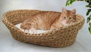 kratzbaum.tv Panier pour chat en jacinthe d'eau tressée