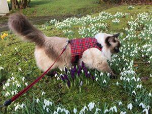 Mynwood Cat Jacket Harnais sécuritaire pour chat adulte Tartan