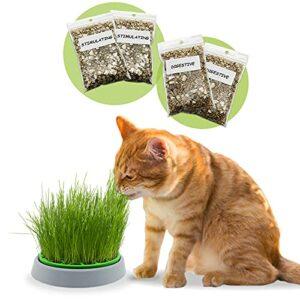 R&R SHOP – Kit Cataire Double Graines – Pot de Germination, 2 Types d'herbe à Chat, stimulante et Digestive, 4 sachets de graines et substrat, Convient à Tous Les Chats